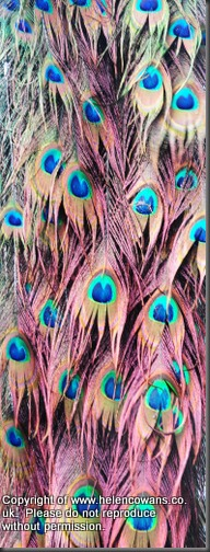 www.textilegoddess.blogspot.com-005